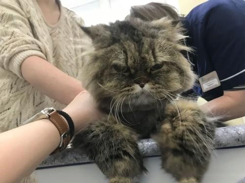 Академвет ветеринарная клиника калининского района